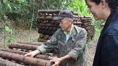 Sr Sakae e sua produção orgânica de shitake