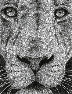 Scribble Lion Canvas Print / Canvas Art by Nathan Shegrud Ink Pen Drawings, Art Drawings Sketches, Animal Drawings, Canvas Art, Canvas Prints, Art Prints, Online Art School, Stippling Art, Lion Drawing