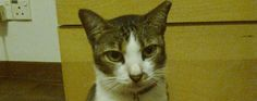 Last week, we said goodbye to Hazel, a sweet feral kitty who contracted FeLV and FIV somewhere along her life.
