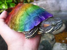 rainbow turtle....not a rainbow trout!haha
