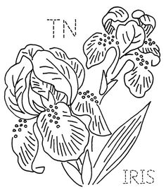 Tennessee Iris by turkeyfeathers, via Flickr
