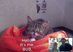 Internet phenomenon Lil BUB served as the CEO of ASPCA for a day, and spent part of its executive tenure the Santa Fe animal shelter.