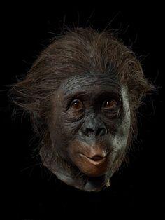 Australopithecus Africanus ~ Kennis & Kennis Reconstructions.