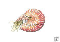 Nautilus art  Nautilus drawing  Nautilus painting  Nautilus