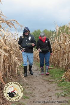 Get Lost - Fall is a perfect time to visit a local corn maze. Many mazes are located on dairy farms. This farm maze is in Clarion county, Pa.
