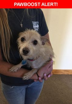 Is this your lost pet? Found in Wichita, KS 67214. Please spread the word so we can find the owner!    Nearest Address: Near E 11th St N & N Minnesota St