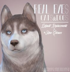 Pet Real Eyes Default Replacements for The Sims 4