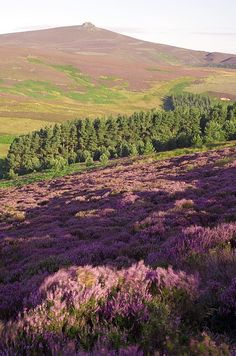 Cairngorms National park, Aberdeenshire, Scotland