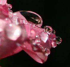 Up close and Rainy by apers27, via Flickr
