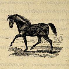 Antique Horse Image Printable Download Digital Graphic Illustration Vintage Clip Art Jpg Png Eps 18x18 HQ 300dpi No.2314 @ vintageretroantique.etsy.com #DigitalArt #Printable #Art #VintageRetroAntique #Digital #Clipart #Download