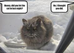 Frozen feline.