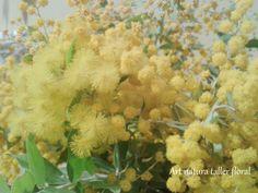 La mimosa. Me gusta su aroma y sus flores con forma de pequeños soles amarillos. Y cuando florece nos dice que la primavera empezará pronto a despertar