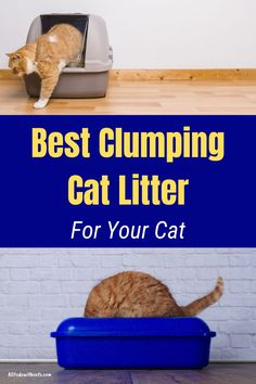What is the best clumping cat litter for your fur baby? Discover some of the best clumping cat for tracking, stopping odor, and is eco-friendly. #clumpingcatlitter #catlitter #whatisthebestclumpingcatlitter #catcareproducts #bestcatlitterfortracking Cat Litter Box Diy, Cat Litter Cabinet, Cat Litter Box Enclosure, Best Litter Box, Cat Tracker, Cat Care Tips, Cat Health, Cat Life