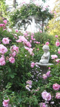 more of the rose garden...