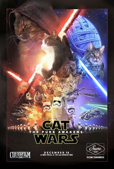 Star Wars The Force Awakens Memes 009 cat wars movie poster Good Things, Cats, Movie Posters, Movies, Gatos, 2016 Movies, Films, Popcorn Posters, Cat