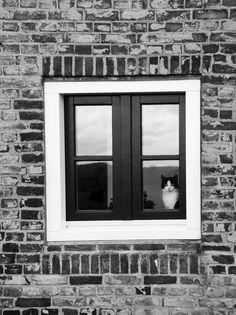Cat Window... 2013