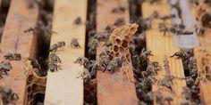 Arı Ürünleri | BEEO