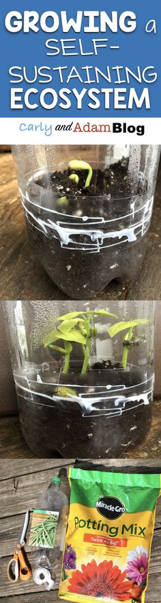 Growing a Self-sustaining Plant Ecosystem (Water Cycle Activity and Growing a Plant) Teach students about ecosystems and the water cycle with this hands-on STEM activity!