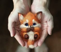 Cute Wild Animals, Baby Animals Super Cute, Cute Baby Dogs, Baby Animals Pictures, Cute Cartoon Animals, Cute Little Animals, Cute Animal Pictures, Cute Puppies, Cutest Animals