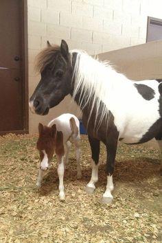 Baby Thumbelina Horse