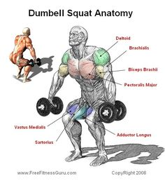 Squats muscle used