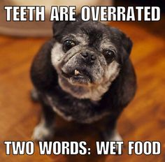15 Senior Dogs Dropping Words Of Wisdom Like Only The Elderly Can