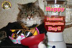 Happy National Margarita Day 2013 with TOM CAT!    www.TheTomCatLife.com