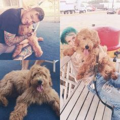 Awww Hayley and Chad' s dog Alf!