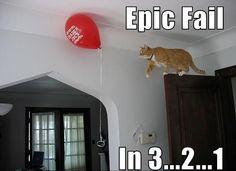 funny-cat-jump-fails-17-high-resolution-wallpaper