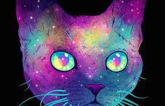 space cats - Google Search