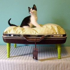 Cat bed!, I saw this product on TV and have already lost 24 pounds! http://weightpage222.com