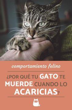 Petit moment câlin souhaité par votre chat et dun coup, il vous mord ? Owning A Cat, All About Cats, Green Nature, Cat Treats, Mundo Animal, Cat Love, Cool Cats, Dolphins, Animals And Pets