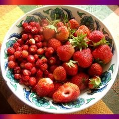Most of us are familiar with the garden variety strawberry. It is beautiful, delicious, and fruits abundantly, usually in June. But there is a...