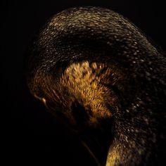 Breathtaking Close-Up Portraits of Wild Animals