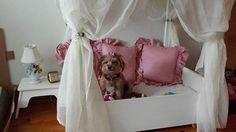 dog princess bed