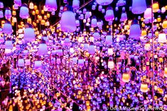 TeamLab Borderless: A visitor's guide to Tokyo's new jaw-dropping interactive light museum Digital Art Fantasy, Digital Art Girl, Museum Lighting, Digital Art Beginner, Tokyo Museum, Interactive Display, Interactive Museum, Digital Light, Digital Art Photography