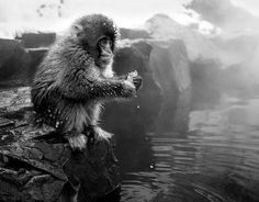Photographer: David Yarrow