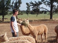 Robert from London UK feeding Alpacas
