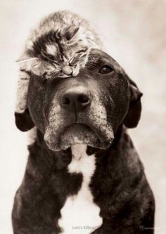 Cute...........but I think one of them is not so happy...