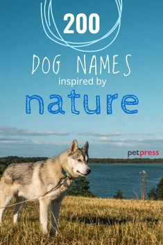 Give your puppy a name that reflects how much joy he/she gets from being outdoors. These nature dog names are perfect for the outdoor dog parent or pup. Best Dog Names Boys, Boy Puppy Names Unique, Boy Cat Names, Great Dog Names, Kitten Names, Pet Names, Boy Dog, Girl And Dog, Nature Names For Boys