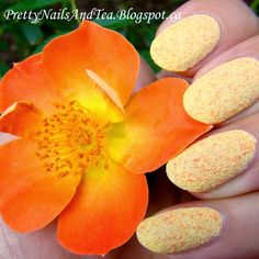 A simple Nail Art to depict the Summer Sunshine, of flowers and seashells ~ of enjoying the outdoors while we may. While the summer hear and sunshine fill the day. Pretty Nail Art, Easy Nail Art, Nail Arts, Natural Nails, Seashells, Maya, Fill, Sunshine, Peach