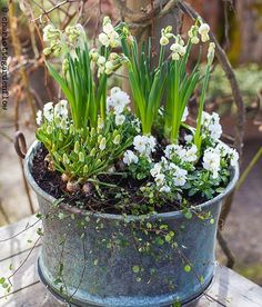 Beautiful narcissus, violas & muscari for Spring❤️ Container Flowers, Container Plants, Container Gardening, Spring Plants, Spring Garden, Garden Planters, Garden Art, Amazing Flowers, Garden Projects
