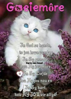 Morning Blessings, Good Morning Wishes, Day Wishes, Morning Messages, Morning Greeting, Good Morning Quotes, Afrikaanse Quotes, Goeie Nag, Goeie More