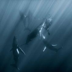 World of whales captured by underwater and environmentalist photographer Darren Jew.