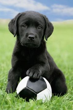 Cute puppy playing with a soccer ball