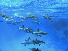 Red sea dolphins, Hurghada, Egypt. This was the first time I saw dolphins in nature and I freaked out :-)