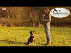 Rückruf des Hundes | Tierversteher TV | WDR - YouTube