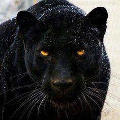 Cross Paintings, Animal Paintings, Animal Jaguar, Panther Cat, Gato Grande, Diamond Drawing, Black Jaguar, Black Panther Marvel, Big Cats