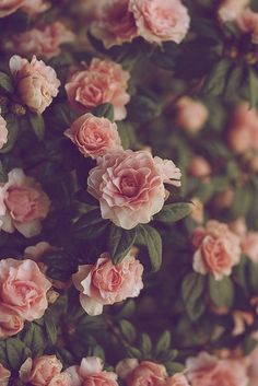 Vintage flowers, so pretty as an iPhone wallpaper.