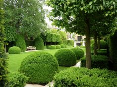Topiary in Holland Park
